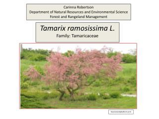 Tamarix ramosissima L. Family: Tamaricaceae