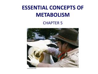 ESSENTIAL CONCEPTS OF METABOLISM