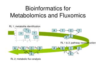 Bioinformatics for Metabolomics and Fluxomics