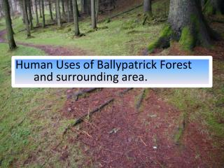 Human Uses of Ballypatrick Forest and surrounding area.
