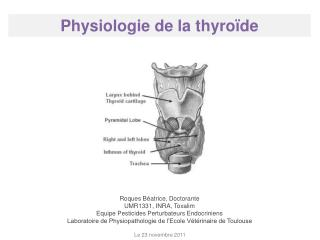 Physiologie de la thyro de
