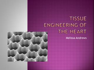 Tissue Engineering of the Heart
