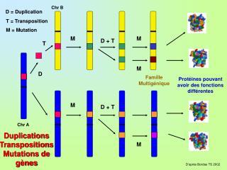 D  Duplication