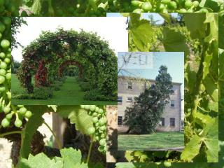 PLANT UNIT Chapters 22-25