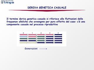 DERIVA GENETICA CASUALE