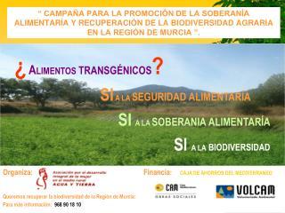 Organiza:                                         Financia : CAJA DE AHORROS DEL MEDITERRANEO