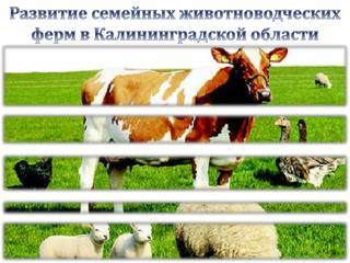 Развитие семейных животноводческих ферм в Калининградской области