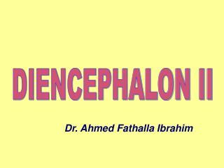 DIENCEPHALON II