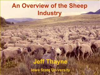 Advantages of Sheep Production