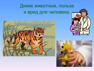 Дикие животные, польза  и вред для человека.