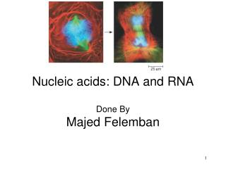 Nucleic acids: DNA and RNA Done By Majed Felemban