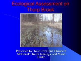 Ecological Assessment on  Thorp Brook