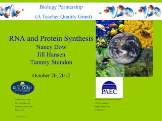 RNA and Protein Synthesis Nancy Dow Jill Hansen Tammy Stundon  October 20, 2012