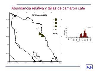 Abundancia relativa y tallas de camarón café