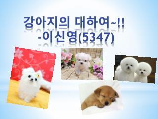 강아지의 대하여 ~!! - 이신영 (5347)
