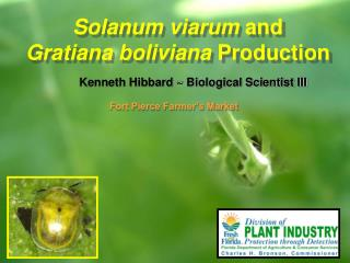 Solanum viarum  and  Gratiana boliviana  Production