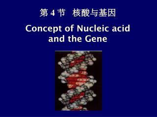 第  4  节   核酸与基因 Concept of Nucleic acid and the Gene
