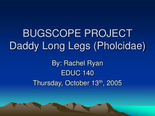 BUGSCOPE PROJECT Daddy Long Legs (Pholcidae)