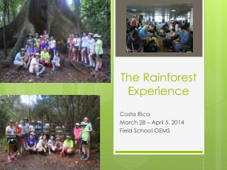 The Rainforest Experience