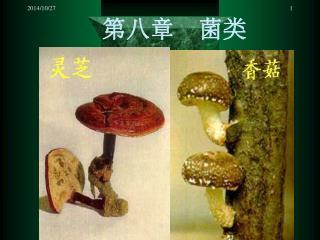 第八章  菌类
