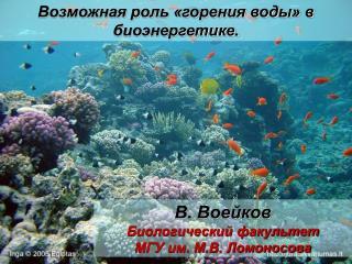 В. Воейков Биологический факультет МГУ им. М.В. Ломоносова