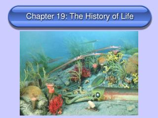Chapter 19: The History of Life