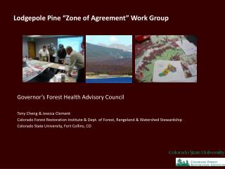 Lodgepole Pine  Zone of Agreement  Work Group