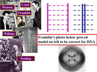 Franklin�s photo below proved model on left to be correct for DNA