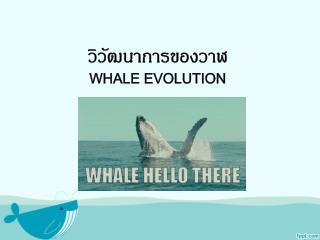 วิวัฒนาการของวาฬ Whale evolution
