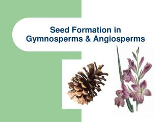 Seed Formation in  Gymnosperms  Angiosperms