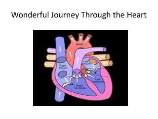 Wonderful Journey Through the Heart