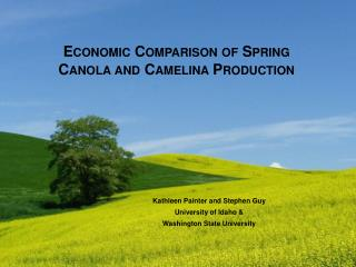 Economic Comparison of Spring Canola and  Camelina  Production