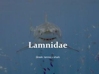 Lamnidae