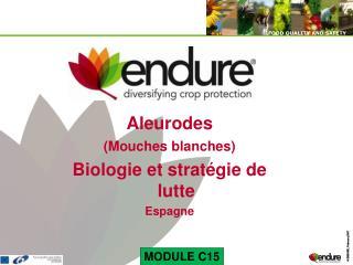 Aleurodes (Mouches blanches) Biologie et stratégie de lutte Espagne
