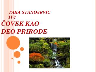 TARA STANOJEVIC IV3