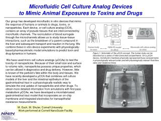 Microfluidic Cell Culture Analog Devices to Mimic Animal Exposures to Toxins and Drugs