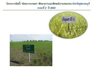 """โครงการจัดตั้ง """" นิคมการเกษตร """" พืชอาหารและพืชพลังงานทดแทน จังหวัดสุพรรณบุรี ระยะที่  2  ปี  2553"""