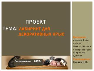 Проект ТЕМА :  лабиринт для                       декоративных крыс