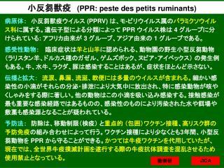 小反芻獣疫 (PPR: peste des petits ruminants)
