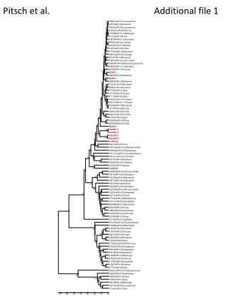 Pitsch et al.Additional file 1