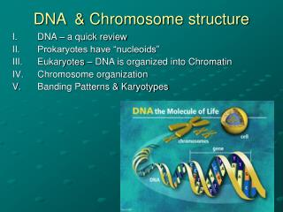 DNA  & Chromosome structure