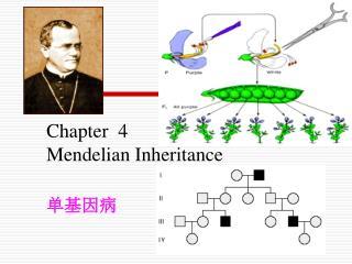 Chapter  4 Mendelian Inheritance