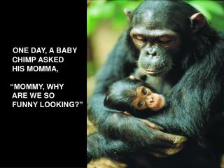 ONE DAY, A BABY  CHIMP ASKED  HIS MOMMA,   MOMMY, WHY   ARE WE SO  FUNNY LOOKING