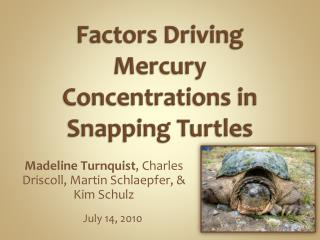 Factors Driving Mercury Concentrations in Snapping Turtles