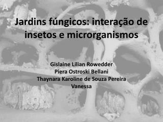 Jardins fúngicos: interação de insetos e microrganismos