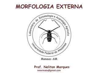 Prof. Neliton Marques nmerinatogmail
