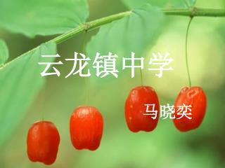 云龙镇中学                          马晓奕