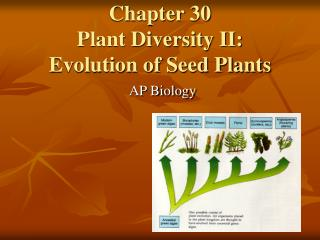 Chapter 30 Plant Diversity II:  Evolution of Seed Plants