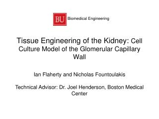 Tissue Engineering of the Kidney:  Cell Culture Model of the Glomerular Capillary Wall