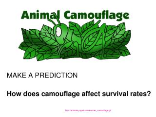 MAKE A PREDICTION How does camouflage affect survival rates?